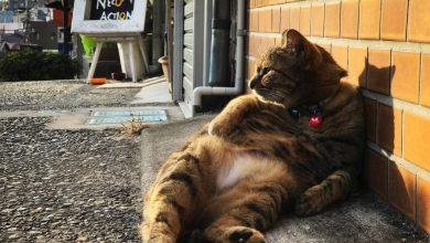 Photo of 毛毛萌萌窩日本❣❣ / 在日本找尋可愛小動物之 – 貓控聖地谷根千(上)