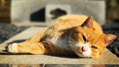 Photo of 毛毛萌萌窩日本❣❣在日本找尋可愛小動物之—貓控聖地谷根千(下)