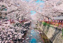 Photo of (東京)中目黑一日遊全攻略–美食景點雜貨18選一次推薦–隈研吾星巴克還有還有…