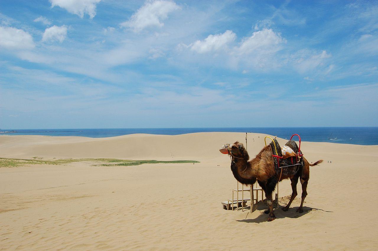 鳥取砂丘騎駱駝