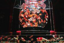 Photo of 日本橋金魚燈光展2019「ECO EDO日本橋ART AQUARIUM 2019~江戶‧金魚之涼~NIGHT AQURIUM」