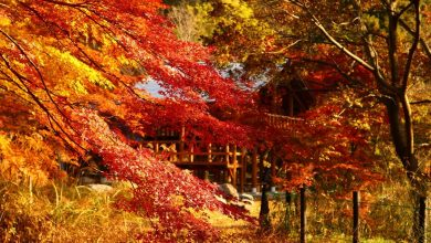 Photo of 日本全國賞楓勝地推薦+2020日本賞楓預測:秋季楓葉最新情報