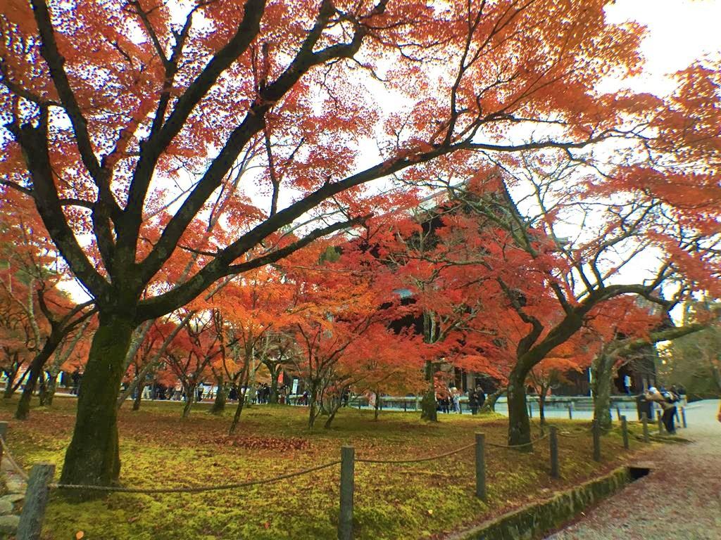 南禪寺楓葉
